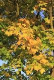 Herbstlaub Lizenzfreie Stockfotografie