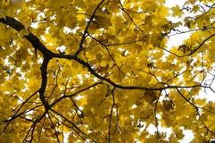 Herbstlaub Stockfoto