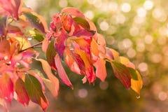 Herbstlaub Lizenzfreies Stockfoto