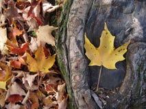 Herbstlaub 2 Lizenzfreies Stockbild