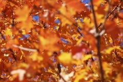 Herbstlaub stockbilder