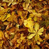 Herbstlaub 2 Lizenzfreie Stockbilder