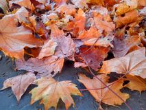 Herbstlaub als Rahmen auf Beton Lizenzfreies Stockfoto