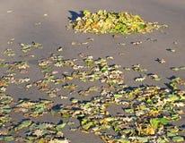 Herbstlaub auf Asphalt Lizenzfreies Stockfoto