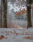 Herbstlaub auf Bäumen in einer Winterlandschaft Stockbilder