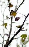 Herbstlaub auf Baumniederlassungen Lizenzfreie Stockbilder