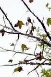 Herbstlaub auf Baumniederlassungen Lizenzfreies Stockfoto