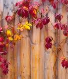 Herbstlaub auf Bretterzaun Stockfotos