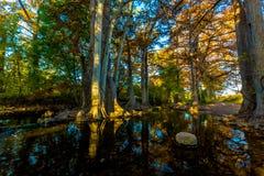 Herbstlaub auf Cibolo-Nebenfluss, Texas stockbilder
