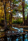 Herbstlaub auf Cibolo-Nebenfluss, Texas lizenzfreies stockbild