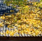 Herbstlaub auf Dach Stockfoto