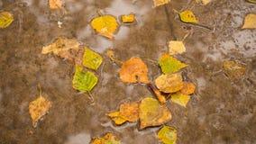 Herbstlaub auf dem Asphalt im Park Lizenzfreie Stockfotos