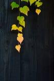Herbstlaub auf dem Bretterzaun Stockfotografie