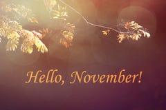 Herbstlaub auf dem dunklen Hintergrund stockfoto