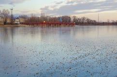 Herbstlaub auf dem Eis lizenzfreie stockfotos
