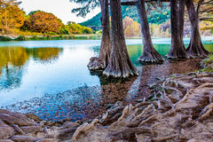 Herbstlaub auf dem haarscharfen Frio-Fluss in Texas lizenzfreies stockfoto