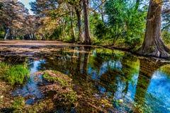 Herbstlaub auf dem haarscharfen Frio-Fluss in Texas lizenzfreie stockfotos