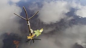 Herbstlaub auf dem Wasser Schließen der Fangzeit stock video