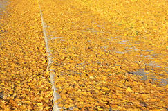 Herbstlaub auf dem Weg Stockfotografie