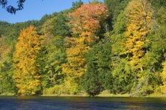 Herbstlaub auf dem Westfield-Fluss, Massachusetts Stockfotografie