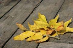 Herbstlaub auf den alten Brettern Stockbilder