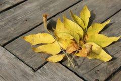 Herbstlaub auf den alten Brettern Stockfotos