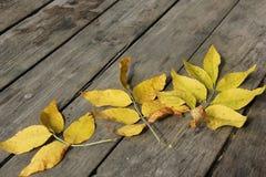 Herbstlaub auf den alten Brettern Lizenzfreies Stockbild