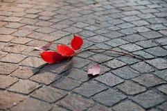 Herbstlaub auf den Pflasterungssteinen Stockfotografie