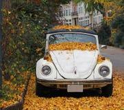 Herbstlaub auf einem Auto Stockfotografie