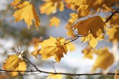 Herbstlaub auf einem Baumast Stockbilder