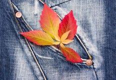 Herbstlaub auf einem Denimhintergrund Stockbild