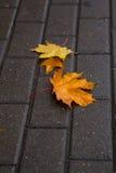 Herbstlaub auf einem nassen Blockstein Stockfotos