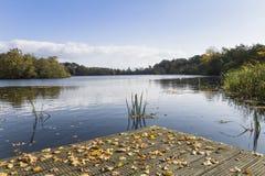 Herbstlaub auf einem ruhigen See Lizenzfreies Stockfoto