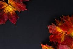 Herbstlaub auf einem schwarzen Hintergrund stockfotografie