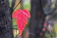 Herbstlaub auf einem undeutlichen Hintergrund Stockfotos
