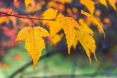 Herbstlaub auf einem undeutlichen Hintergrund Lizenzfreies Stockbild