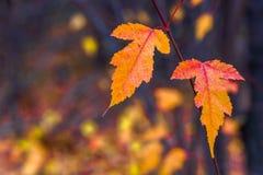 Herbstlaub auf einem undeutlichen Hintergrund Stockfoto