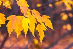 Herbstlaub auf einem undeutlichen Hintergrund Stockbilder