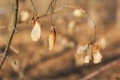 Herbstlaub auf einer Niederlassung gegen einen unscharfen Hintergrund Lizenzfreie Stockbilder