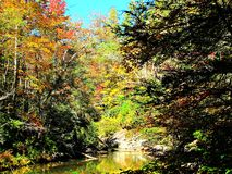 Herbstlaub auf Gebirgsfluss Lizenzfreies Stockfoto