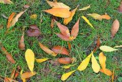 Herbstlaub auf grünem Gras Stockfotografie
