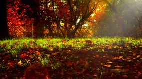 Herbstlaub auf grünem Gras im Sonnenlicht, das traumhafte, magische Atmosphäre anbietet lizenzfreie stockfotos