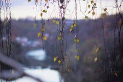 Herbstlaub auf hängenden Niederlassungen Stockbilder
