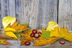 Herbstlaub auf hölzernem Brett Lizenzfreies Stockfoto