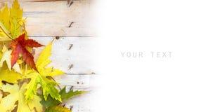 Herbstlaub auf hölzernen Planken Stockbilder