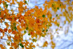 Herbstlaub auf Hintergrund des blauen Himmels Lizenzfreies Stockfoto