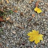 Herbstlaub auf Kieshintergrund am botanischen Garten Stockfotos