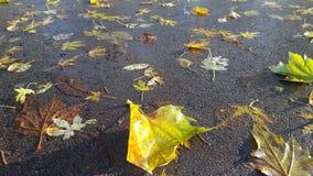 Herbstlaub auf nassem Boden stockbilder