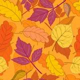 Herbstlaub auf Orange Stockfotos