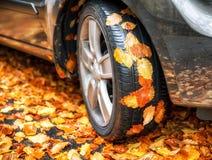 Herbstlaub auf Reifen des Autos lizenzfreie stockfotos